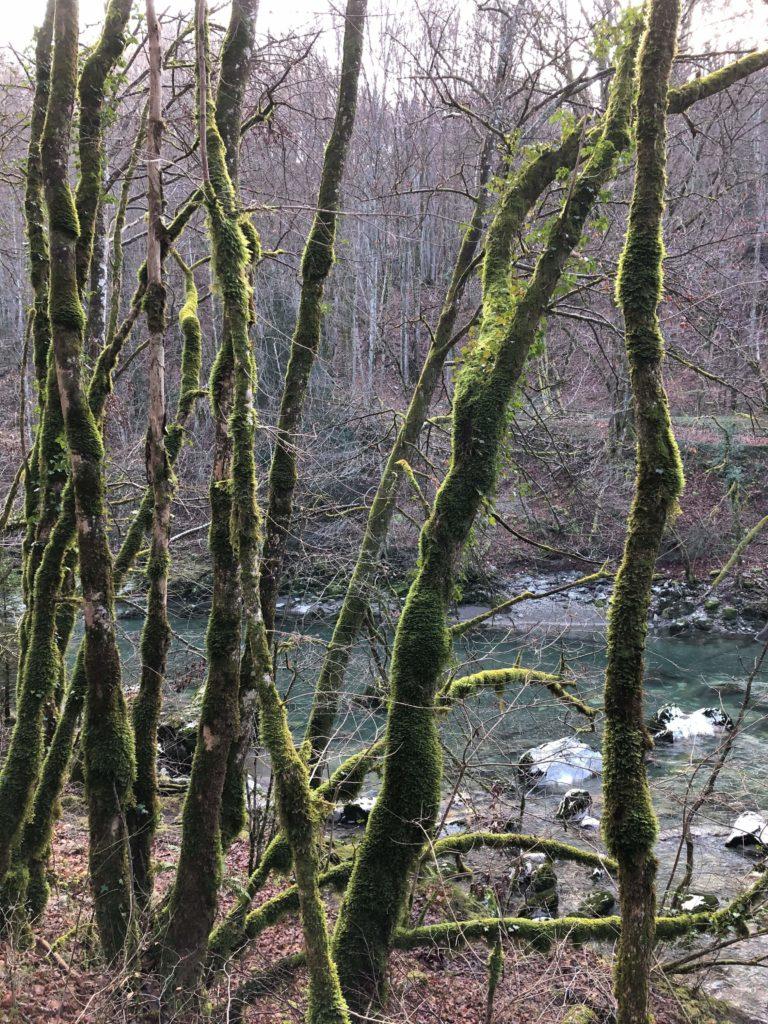 Arbres et rivière dans la forêt I Ô Pays des Sens